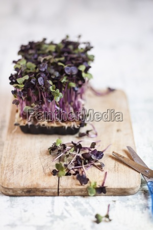 naturaleza muerta comida hoja herramienta instrumentos