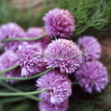 primer plano jardin flor planta las