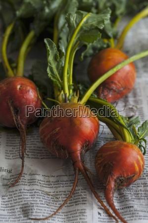 diario tageblatt primer plano interior vegetal