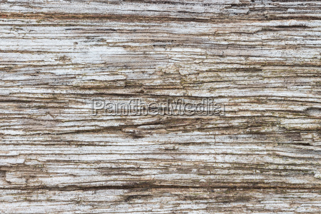 close up old wood texture