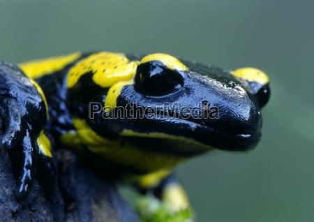 animal ojo organo piel negro arroyo