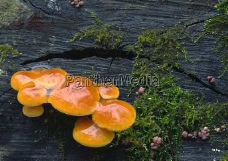 naranja arbol madera tronco negro reflexion
