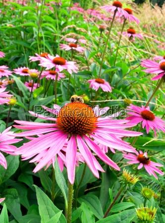 cono de flores en el jardin