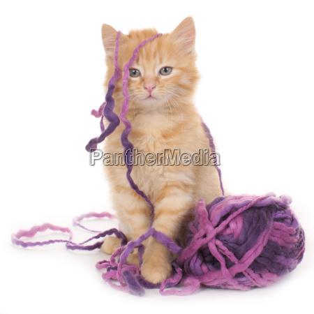 gatito con pelota de lana