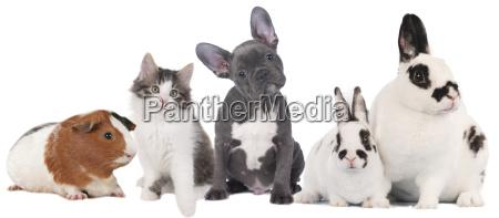 grupo de diversos animales domesticos