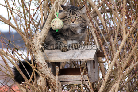 un gato en la casa de