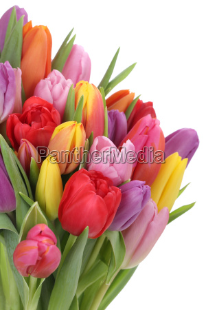 ramo de tulipanes en primavera o