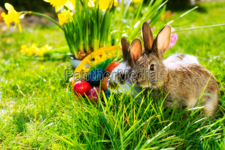 conejo de pascua con huevos de