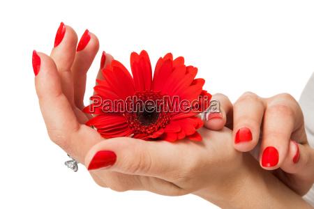 manos de mujer aisladas con hermosos