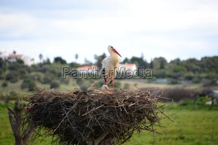 cigueenyas en nest espanya