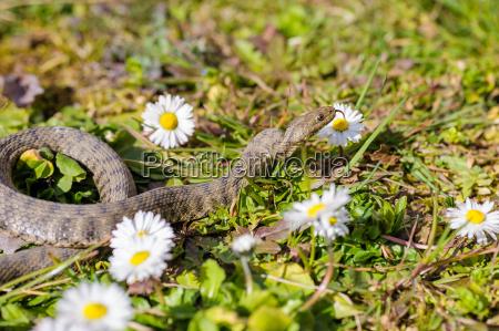 animal reptil serpiente naturaleza
