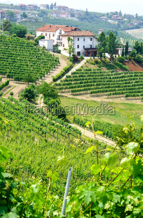 agricultura vinya viticultura rebstock lagar italia