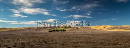marron verano veraniego ancho campos oasis