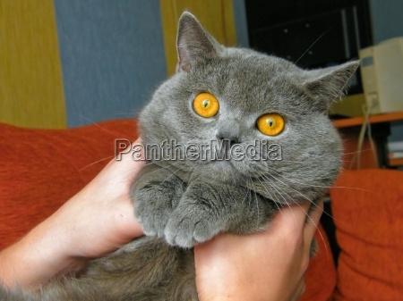 animal mascotas perro cachorro gato