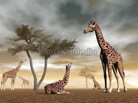 jirafas en la sabana renderizado