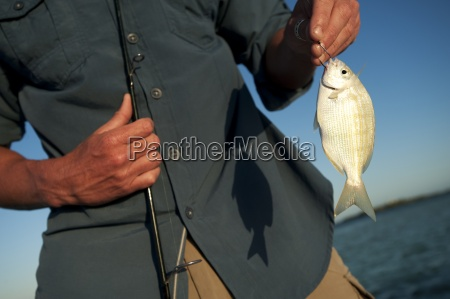 azul animal pescado eeuu horizontalmente al