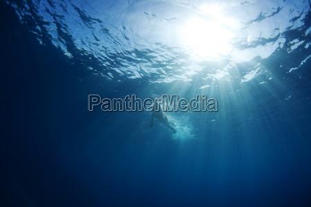 vista bajo el agua de un