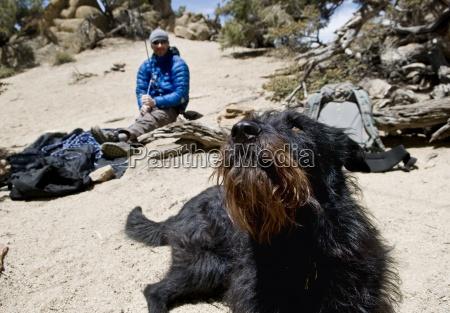 animal mascotas eeuu horizontalmente perro california