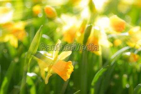 hermoso bueno parque jardin flor las