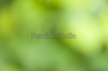 fondo borroso abstracto de las plantas