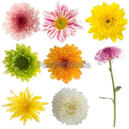 liberado flor planta las maravillosas flores