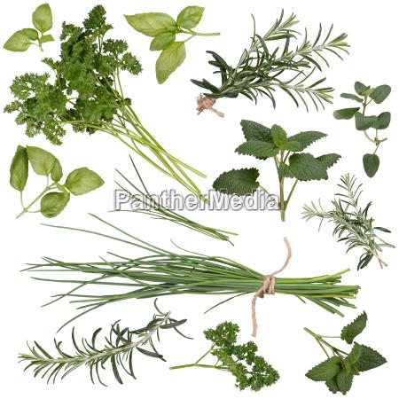 hierbas frescas