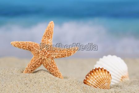 viaje fiesta vacaciones playa la playa