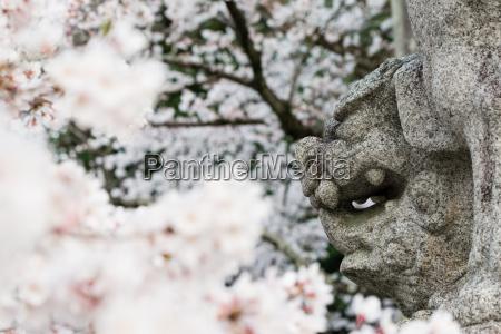 cara del perro del leon y