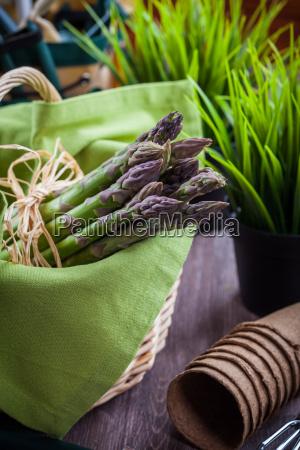 esparragos verdes frescos con herramientas de