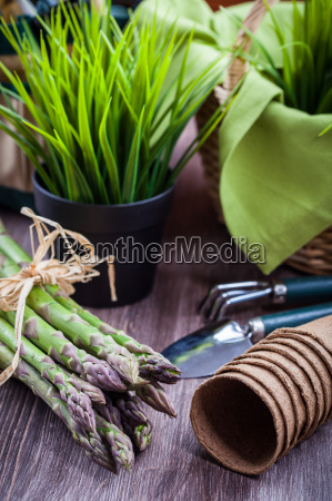 instrumentos cosecha canasta cocina esparragos equipo