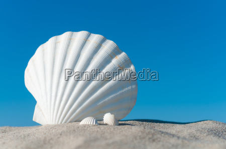 white shells on summery sand beach