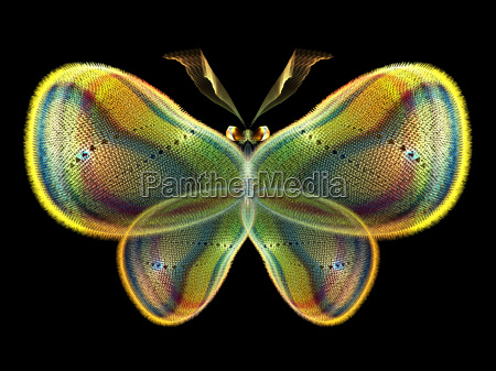 elegancia de la mariposa