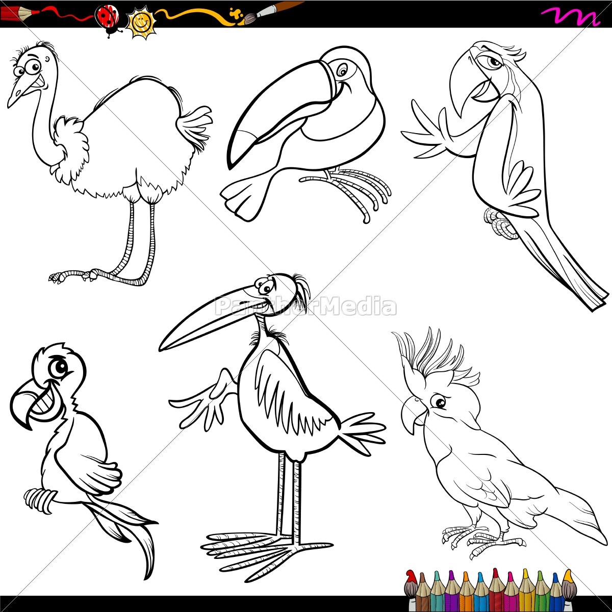 Vector Libre De Derechos 14352485 Dibujos Animados Aves Página Para Colorear