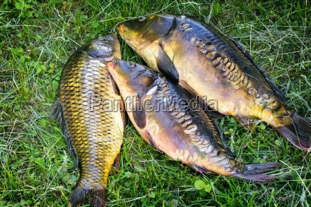 comida entretenimiento pescado los cocineros cocina