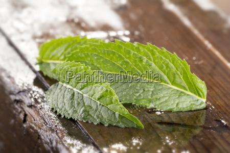 verde menta col hierba pagina fresco