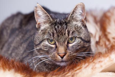 primer plano animal piel gato