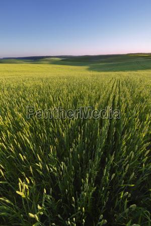 campo agricola