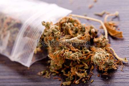 flores de marihuana cannabis en una