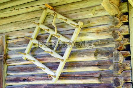 herramienta planta implantado madera antiguo dientes