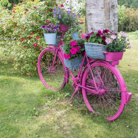 arbol jardin rueda flor planta flores