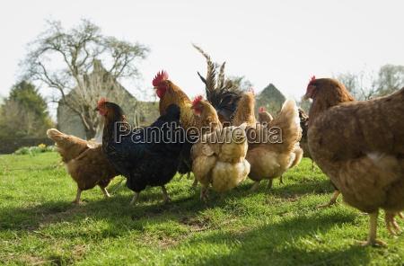 animal europa primavera al aire libre