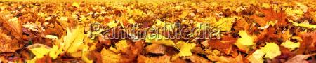 hojas de otonyo banner super ancho