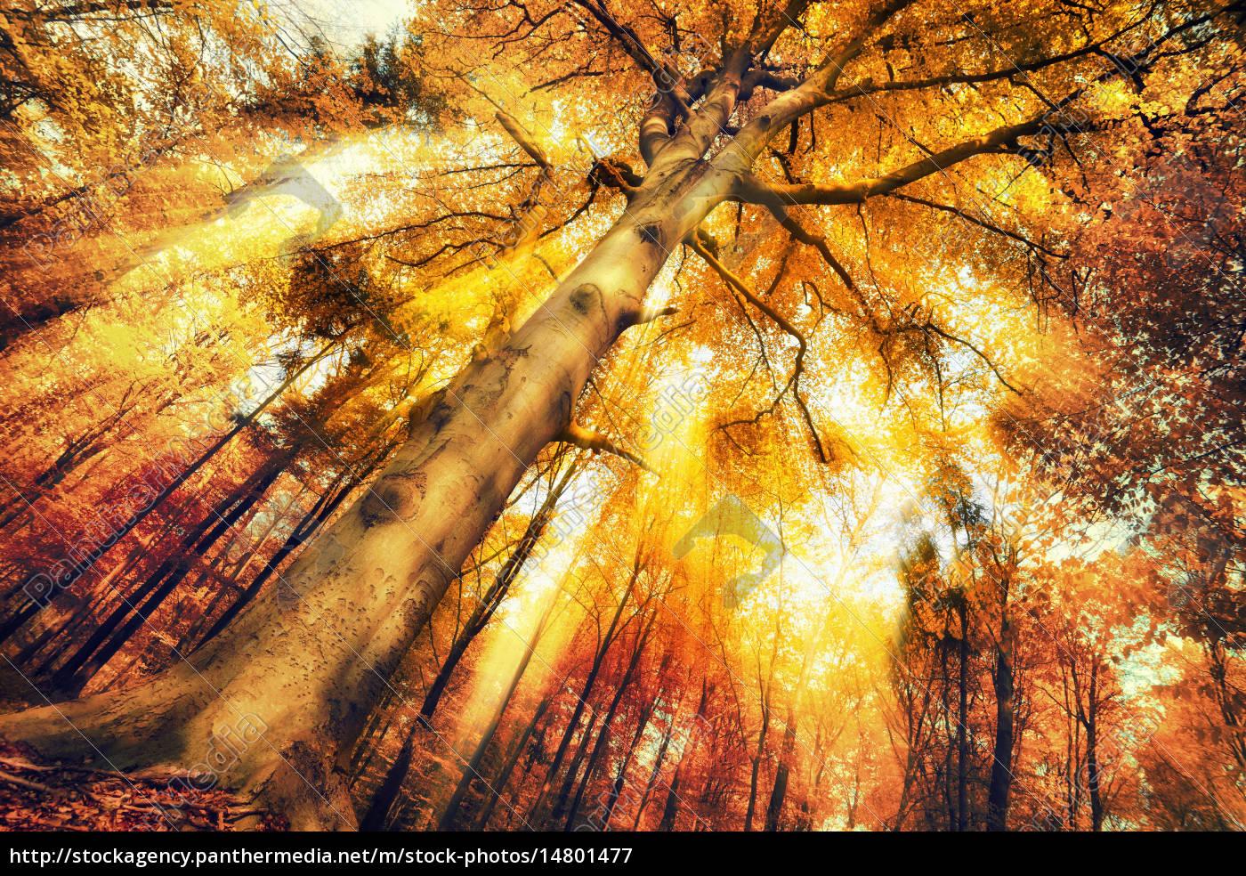 encantador, paisaje, forestal, en, otoño - 14801477