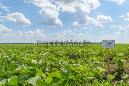 horizonte campo cosecha granja soja paisaje