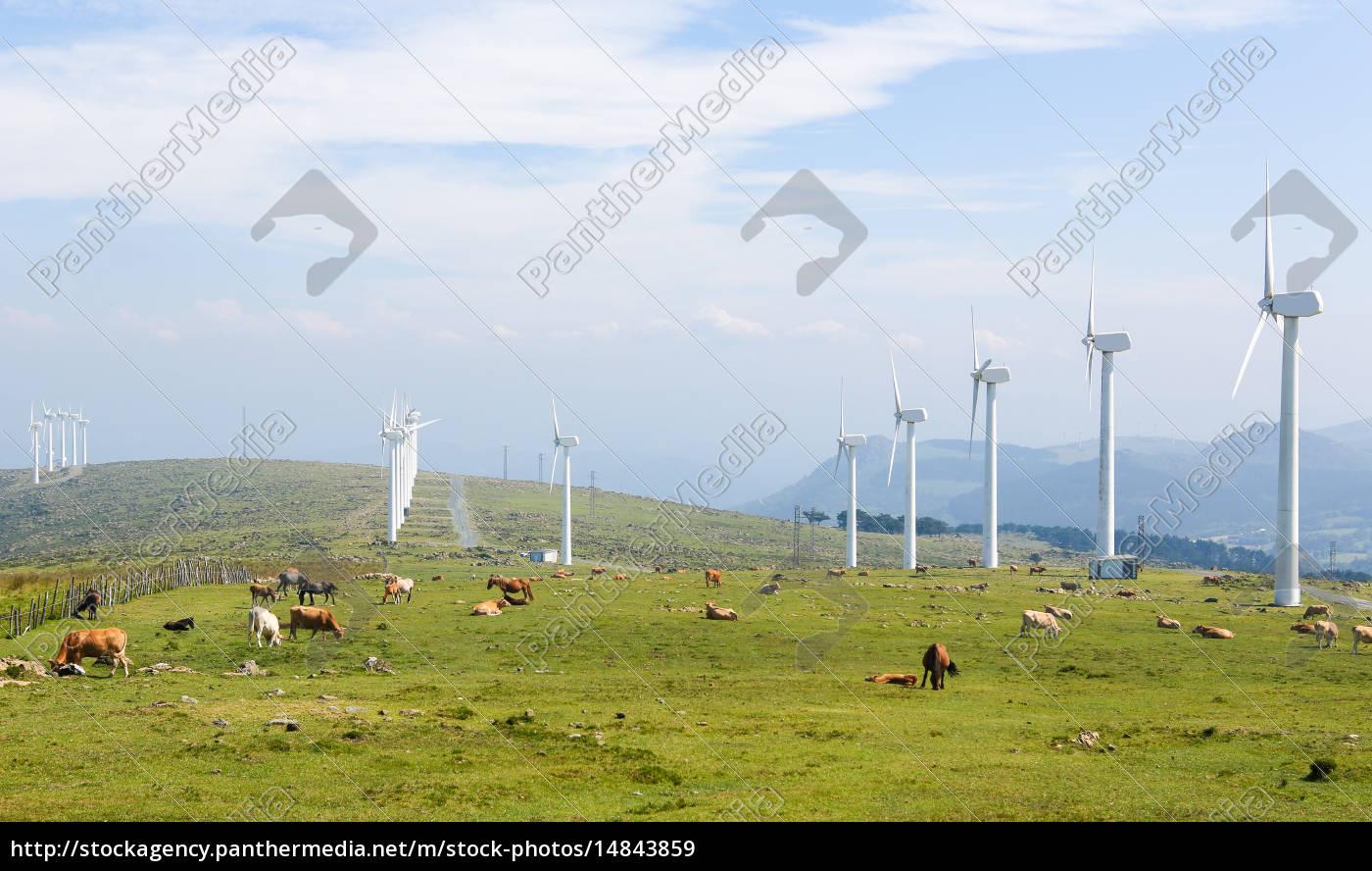 aerogeneradores, en, un, parque, eólico, en - 14843859
