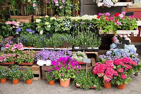 flores y plantas fuera de la