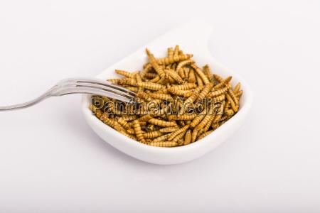 comida salud primer plano animal insecto