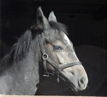 caballo animal mascotas mamifero animal de