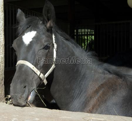 pferd pferdekopf puesto