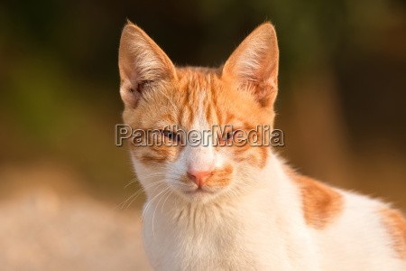 red cat portrait